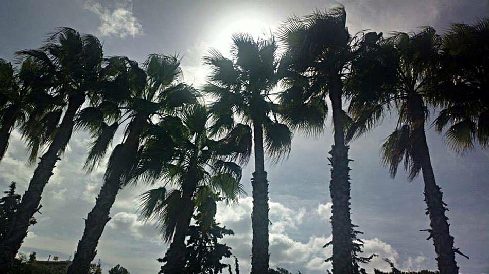Greece Crete Palm Trees Sun Beautiful Nature Beautiful Day