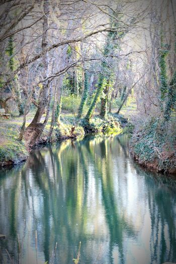 Reflets verts Tree Water Reflection Willow Tree Branch Tranquility Tranquil Scene Calm