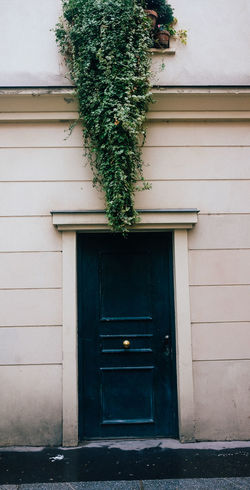 Green Nature Plant Buidling Closed Door House Outdoors Street