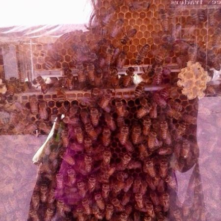 Bees Photography Honeycomb Honeymakers Farmersmarket Community Queenbeez Employee Of The Month Labor Cooperation Workerbee Sweet Dreams HoneyBear Honey ❤ Bees At Work Taking Photos Check This Out