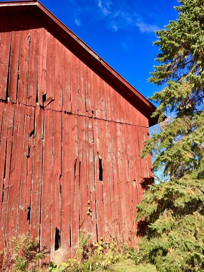 There's something amazing about Michigan barns, a blue sky and pine trees. Snapseed Country Barn Red Color Red Barn Blue Sky Colors Outside Wood Barn Wood Out Of The City In The Country Freedom Michigan I Love Photograpy