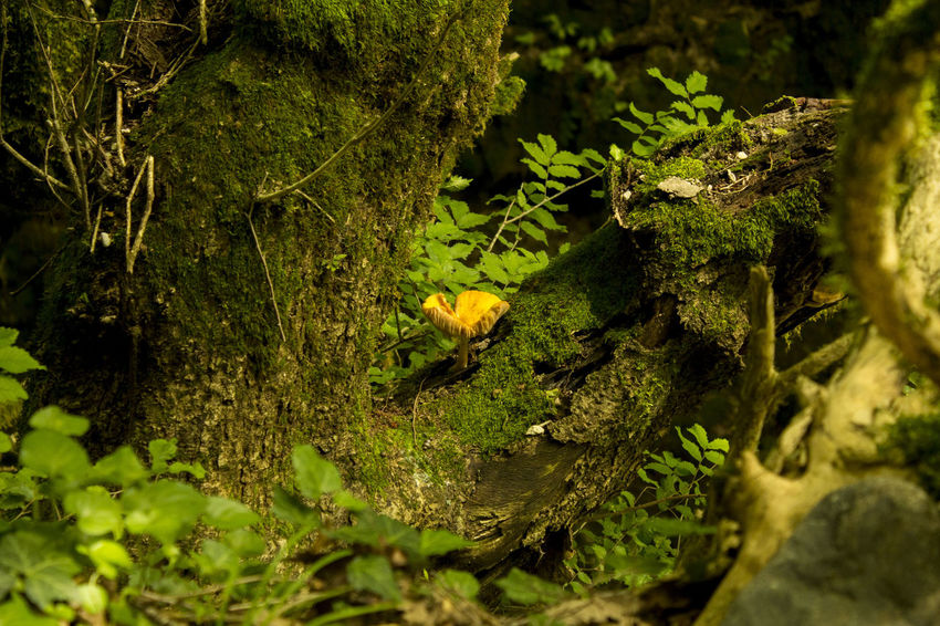 Yellow mushroom in the forest #Georgia #GreenandYellow #Swag #cute #PackerNation #martvili #mushroom Summer Road Tripping Animal Close-up Day Frog Green Color Growth Leaf Moss Nature No People Outdoors Plant Plant Part Selective Focus Tree