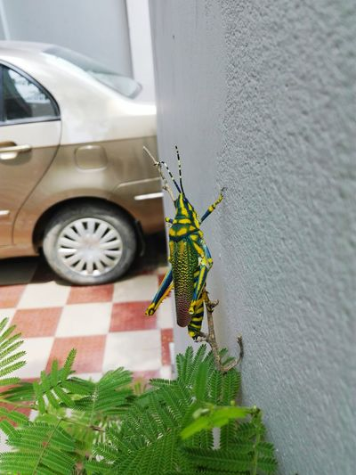 Meet my cute little friend. Insect Photography Varanasi Home First Eyeem Photo First Eyeem Photo
