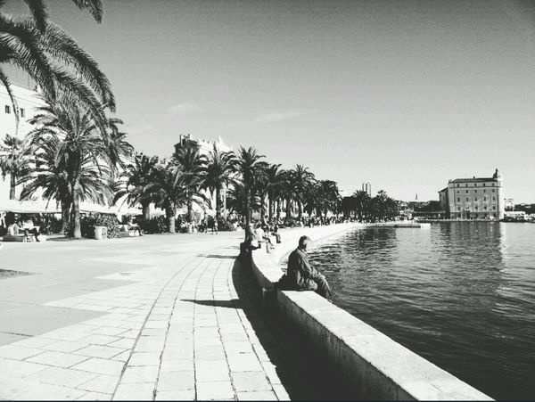 Capturing The Moment Split Croatia Historical City Dioklecijanovapalaca Riviera Seaside Coastalliving Palmtrees Tropical Climate EyeEmBestPics EyeEm Best Shots - Black + White Eyeemphotography EyeEm Best Shots First Eyeem Photo Photoforsale