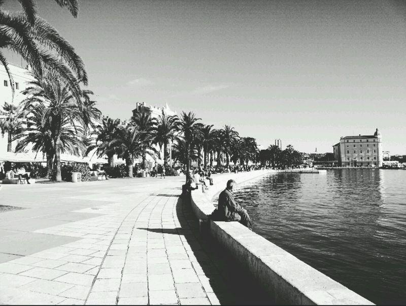 Capturing The Moment Split Croatia Historical City Dioklecijanovapalaca Riviera Seaside Coastalliving Palmtrees Tropical Climate EyeEmBestPics EyeEm Best Shots - Black + White Eyeemphotography EyeEm Best Shots First Eyeem Photo Photoforsale