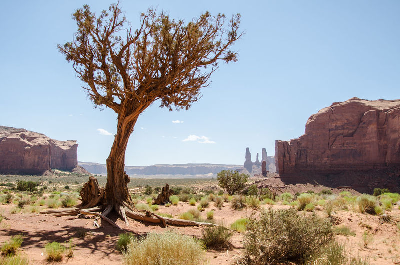 View of tree on rock formation against clear sky