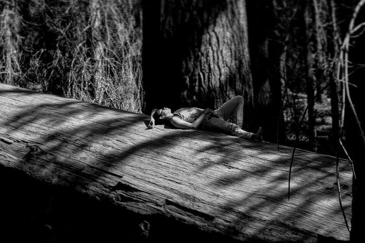 Tree Outdoors NikonD5500 Yosemite National Park