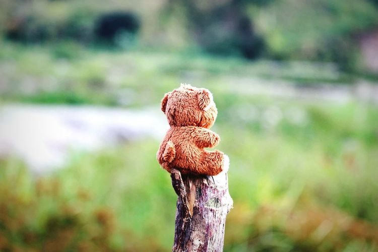 Close-up of teddy bear on wooden post
