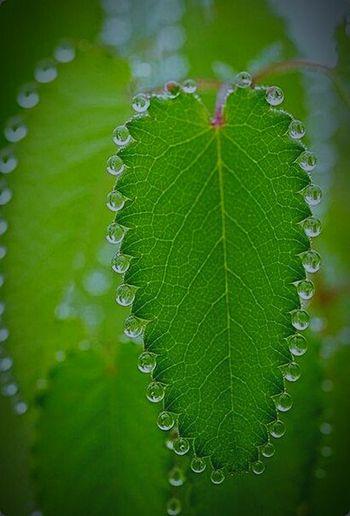 красота Природа роса цветы листок райперфекциониста