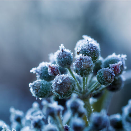 EyeEmNewHere Plant Winter Snow Cold Temperature Growth Nature Close-up Selective Focus Beauty In Nature Freshness Day No People Focus On Foreground Fragility Frozen Vulnerability  Flower Frost Healthy Eating Outdoors