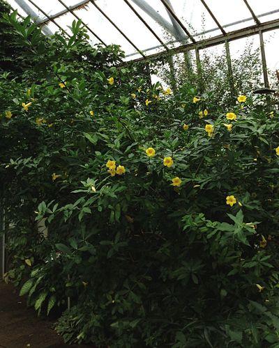 Royal Botanic Garden in Edinburgh. Royal Botanic Gardens Botanical Gardens Garden Edinburgh Scotland Walking Around Green Trees