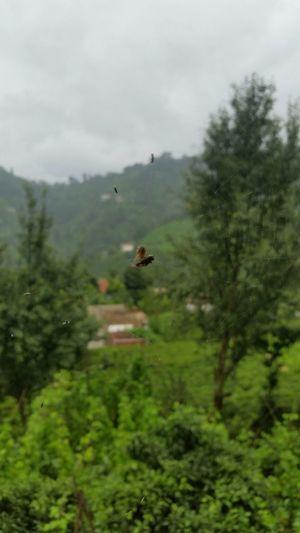 Spiderweb Spider Fly 🍃🍀🌲🌳
