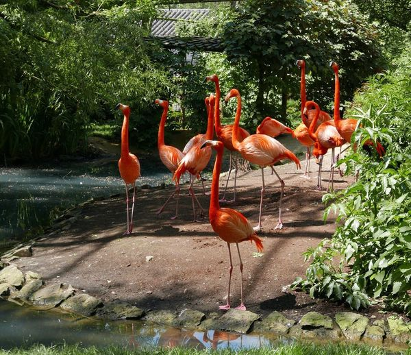 Bird Flamingo Animal Themes Outdoors Animals In The Wild Nature No People Animal Wildlife Full Length Beauty In Nature Water Day Tree Flamingos Flamingo At The Zoo Flamingos In Water Fauna Zoo Animals  Birds Leica D-Lux Daylight