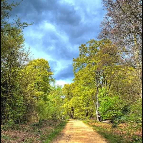 Eppingforest Path Trees Wentforawalk greenery clouds cloudy hdr hdrphotography highdynamicrange goldenpath beautiful nikon