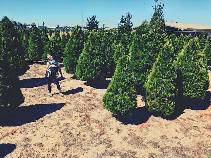 How we do Christmas tree hunting in Perth Tree Outdoors Shadow Christmas Tree Christmasinperth Swanvalley Aussielife Togetherness Enjoyment Baby Perthisok Jaspercharles