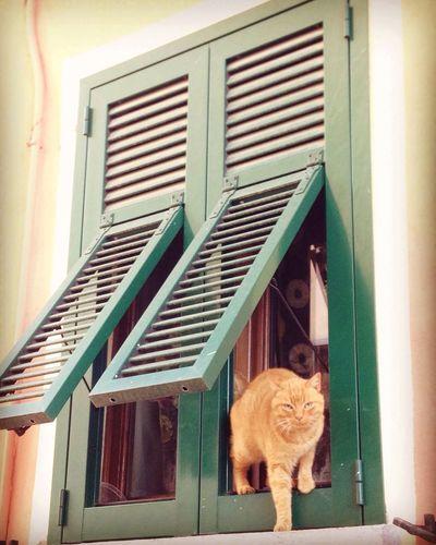 Cat by a window Cat Window (null)