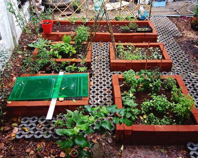 สวนผักในเมืองกรุง Nursery ชาวสวน ปลูก ต้นไม้ ผัก