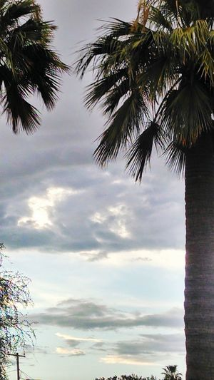 Phoenix, AZ Palm Tree Tree Scenics Nature Cloud - Sky Enjoyment Weekend Activities Outdoors Day Sky Idyllic Tranquility Perspectives On Nature