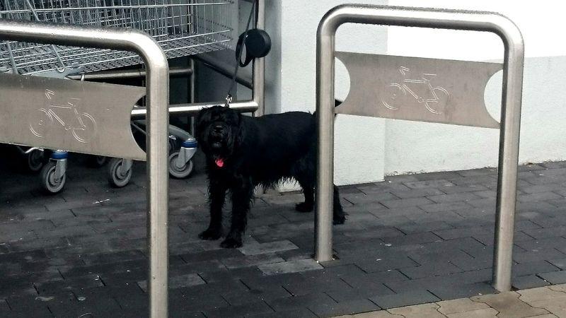 Czeka... One Animal Dog Domestic Animals Black Color No People