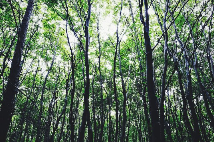 Tree Forest Nature Low Angle View Green Color Growth Beauty In Nature Bamboo - Plant Tranquility Outdoors Bamboo Grove Day Branch Tree Trunk No People Sky EyeEm Selects Green Color Beauty In Nature Backgrounds Background Breathing Space The Week On EyeEm Mix Yourself A Good Time Perspectives On Nature The Great Outdoors - 2018 EyeEm Awards The Traveler - 2018 EyeEm Awards