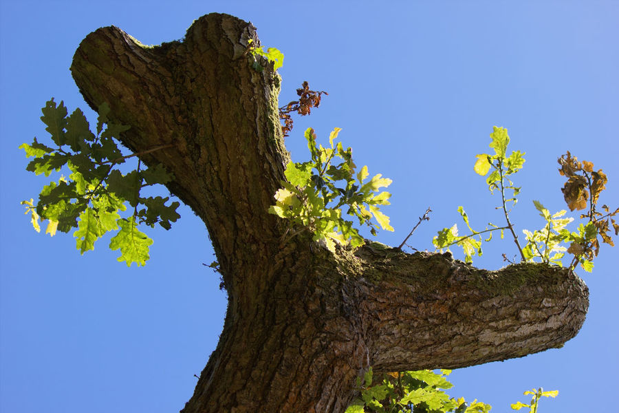 Tree Blue Nature Tree Trunk Branch Plant Growth Low Angle View Day Leaf No People Outdoors Sky Beauty In Nature