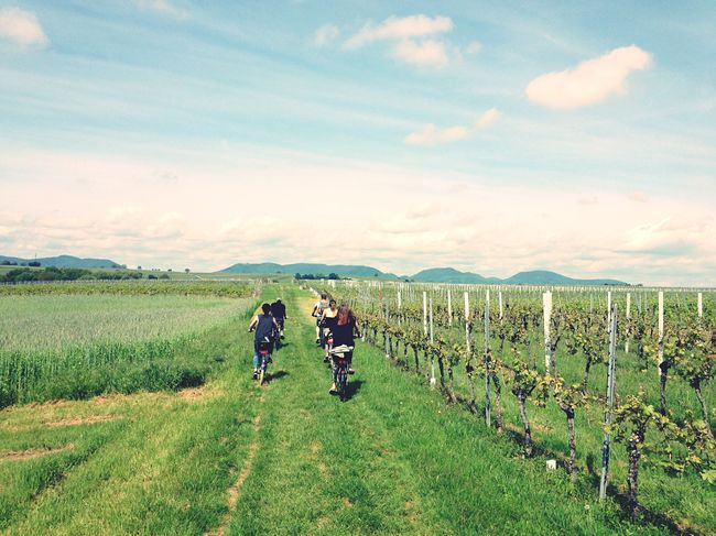 Enjoy The New Normal Agriculture Real People Rural Scene Field Landscape Growth Sky Nature Green Color Farm Beauty In Nature Scenics Outdoors Cloud - Sky Day Togetherness Freshness Bikeride Tour Vineyard