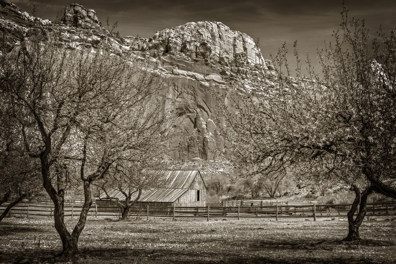 Wooden Barn at Fruita, Utah. Seen in the Capitol Reef area of southern Utah. American Barn Butte Utah Wood American Southwest Beauty In Nature Black And White Butterfly Day Environment Fruita Land Landscape Nature No People Orchard Outdoors Park Scenics - Nature Sepia Sky Southwest  Tree Vintage