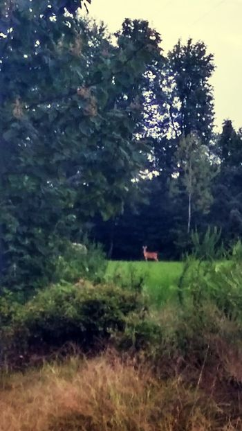 Tree Outdoors Day Nature Sky No People Beauty In Nature Forest Scenics Water one deer
