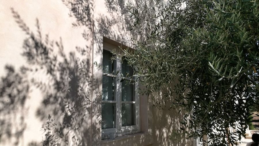 Sicily Eye4photography  Eye4photography  Window Olives Olive Tree Shadow Countryside Tranquility Tranquil Scene Offwhite Sicilia