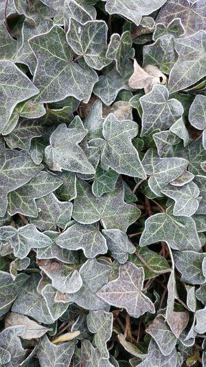 Leaf Nature Plant No People Macro Macro Photography Nature Leaf 🍂 EyeEm Nature Lover Wintertime