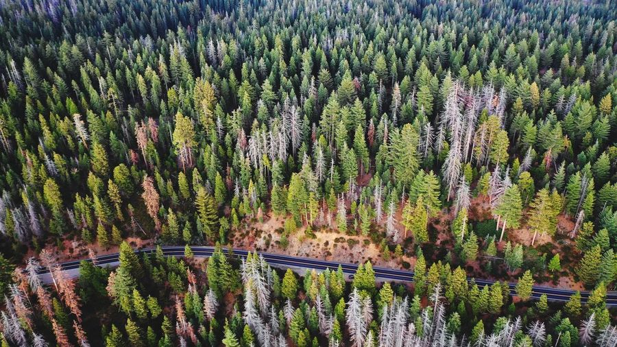 Woods Eye Em Nature Lover Eye Em Around The World Eye Em Best Shots EyeEm Best Shots USA Mavic 2 Pro Dji Topdown Drone Photography Drone  Street Forest Photography Forest Yosemite Plant Growth Beauty In Nature Tree Land Day Nature Green Color Landscape No People High Angle View Scenics - Nature Outdoors Environment