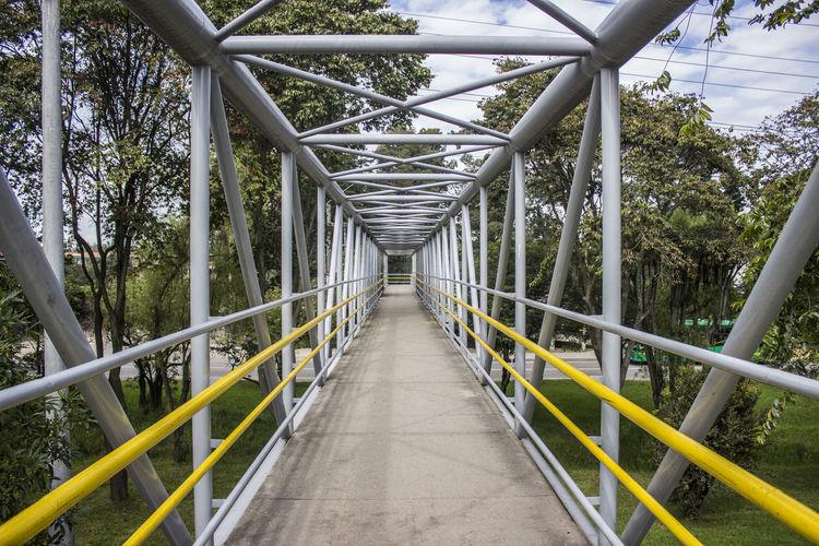 Elevated Walkway Bridge In Forest