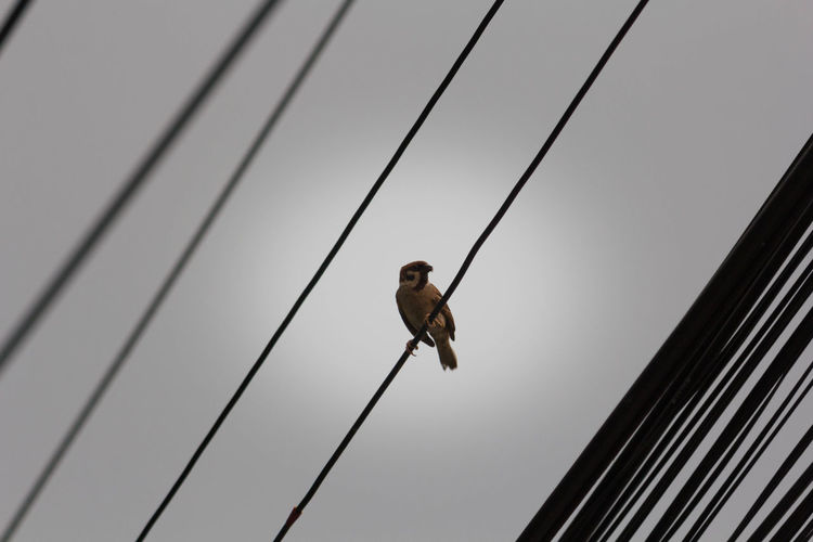 Low angle view of bird perching on power lines