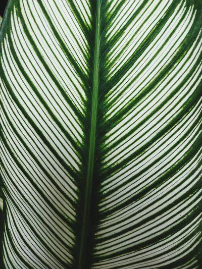 dimension leaf