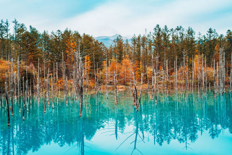 Water Plant Tree Reflection Tranquility Beauty In Nature Lake Tranquil Scene Sky Scenics - Nature Nature Waterfront No People Day Non-urban Scene Growth Cloud - Sky Outdoors Land Turquoise Colored