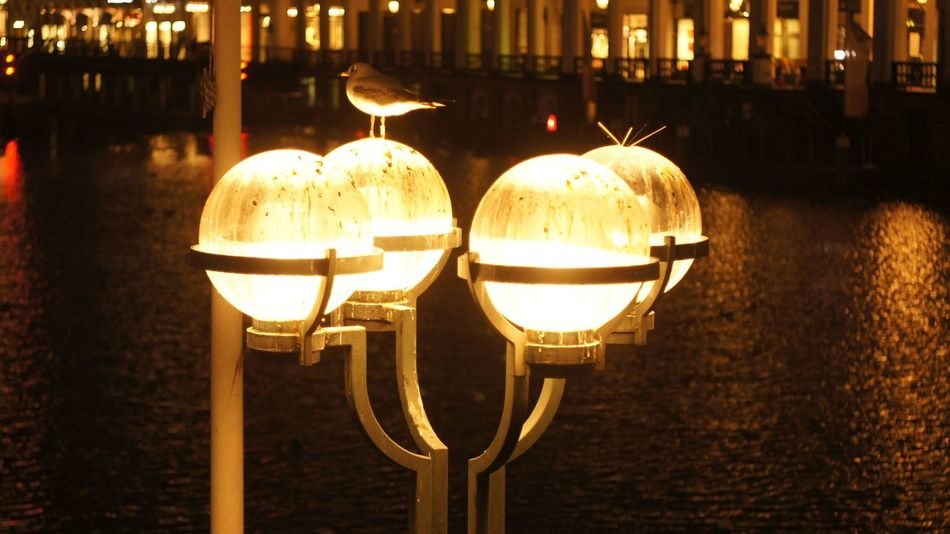Bokeh City Lights Dove Fed Golden Hamburg Industar61 Möwe Nightphotography Sony Nex3