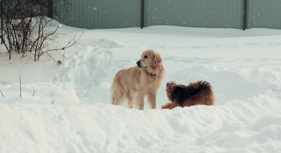 Animal Themes Animal Wildlife Animals In The Wild Beauty In Nature Cold Temperature Day Dog Dogs Dogs Of EyeEm Field Full Length Mammal Nature No People Outdoors Puppies Puppy Puppy Love Representing Snow Togetherness Weather Winter