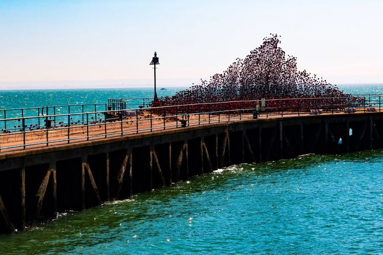 The Great Outdoors - 2017 EyeEm Awards Poppy Tour Barge Pier Southend On Sea Shoeburyness Water Clear Sky Day Architecture Nature Sea Built Structure Outdoors Bridge - Man Made Structure Sky Horizon Over Water Scenics Beauty In Nature People