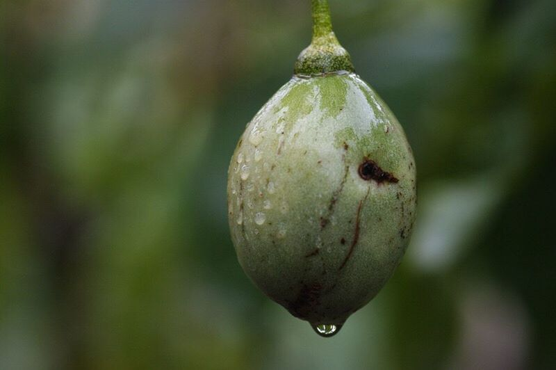 seed pod Close-up Growth Freshness Growing Nature Beauty In Nature