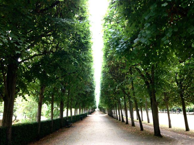 France Europe Oise  Compiegne  Arbres Perspective Vert Parc Jardin Picardie