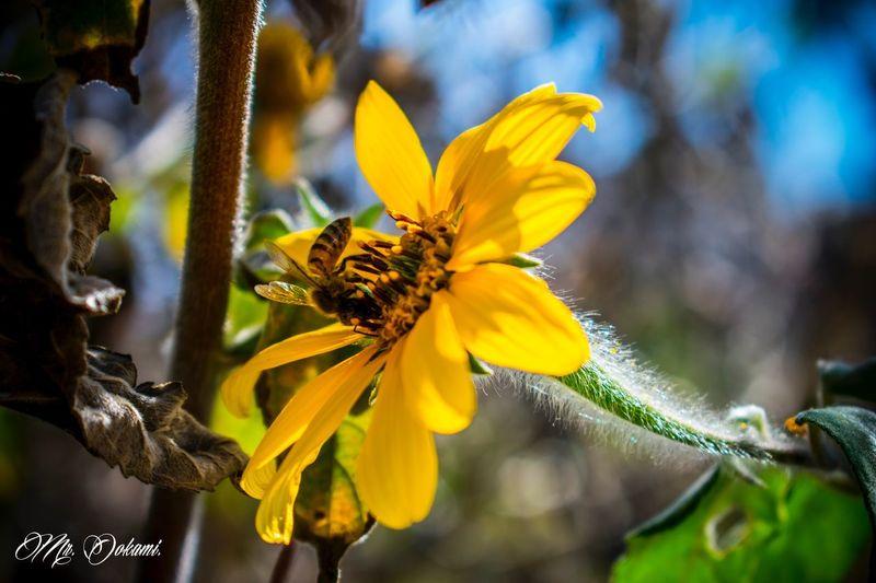 Magnífica naturaleza 😊 Macro Macro_collection Flower Fragility Nature Beauty In Nature Yellow Pollen Bee Abeja Flor Flowers Amarillo Puebla Macro_flower EyeEm Nature Lover Macro Photography Beautiful