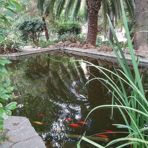 Pond Fishes Plants Nature UB UniversitatdeBarcelona Barcelona Bcndreamers Bcnexploradores Bcnexplorers Thebarcelonist Beautiful Estanque Peces étang Poissons Kalaa