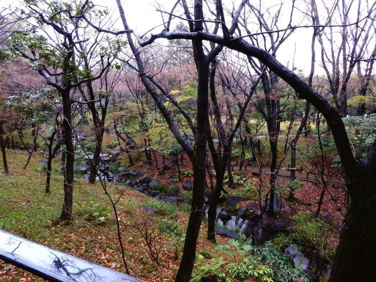 Streetphotography Rainy Days Rain Tree The Way Forward Tranquil Scene Streamlet