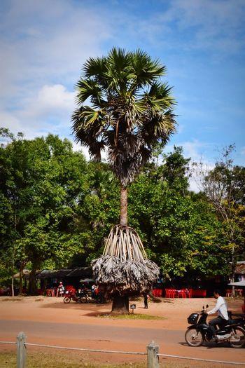 Palm trees on street against sky