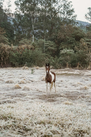 Dog riding horse on field
