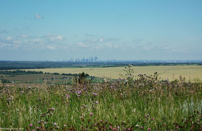 Calgary, Alberta on the horizon. Cities On The Prairies Cowtown Coliseum Nature Photography Peaceful View Prairie Scenes Beauty In Nature Calgary, Alberta Fields Of Gold Grass Horizon Over Land Landscape Love Yourself Love Yourself The Way You Are Dont Change For No One  No People Scenics Tranquil Scene Wild Flower Photography Colour Your Horizn
