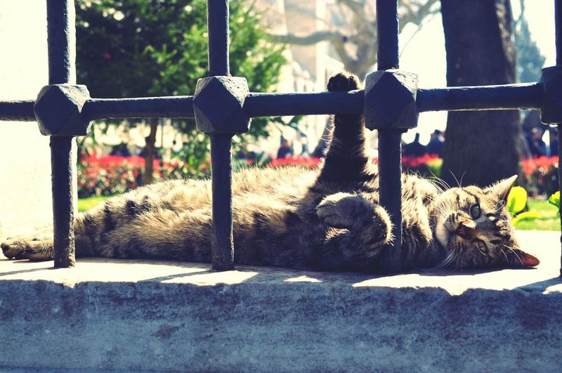 Cat Relaxing Free Cool
