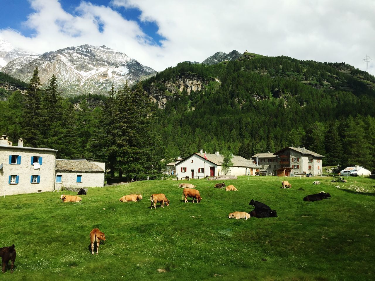 mountain, building exterior, nature, architecture, field, mountain range, grass, built structure, day, sky, landscape, animal themes, green color, livestock, large group of animals, no people, outdoors, scenics, beauty in nature, domestic animals, tree, mammal