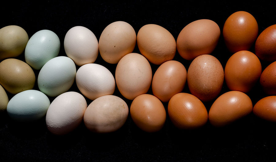 From green to brown gradient eggs on solid black background view from top Easter Gradient New Life Abundance Arrangement Black Background Close-up Egg Food Freshness Happy Easter Header Healthy Eating High Angle View Large Group Of Objects Multi Colored Order Organic Side By Side Still Life Studio Shot Tones Village Wellbeing White Color