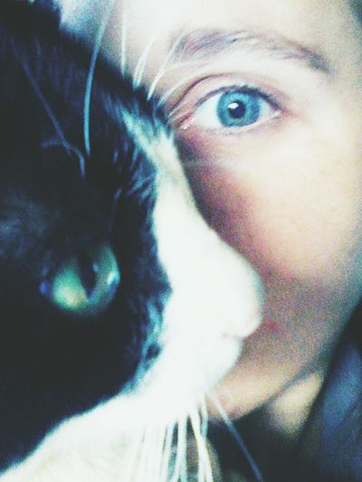Miau *-*  MeuDengo